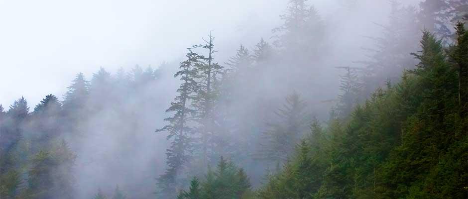 fog940x400